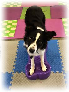Pawsitive Performance >> Fit Paw Fun